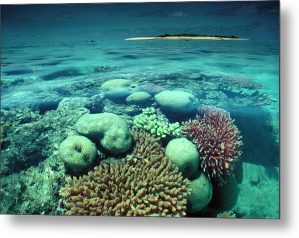 Great Barrier Reef In The Foreground Metal Print by Auscape / Uig