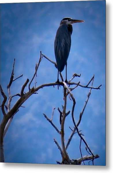 Great Blue Heron 3 Metal Print