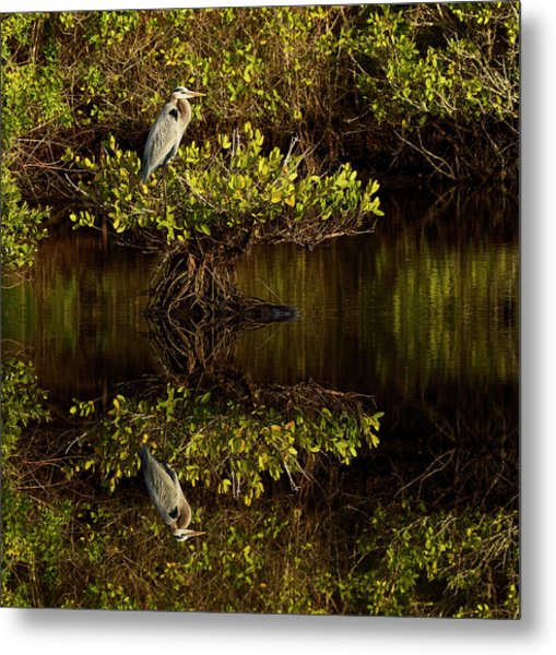 Great Blue Heron And Reflection, Ardea Metal Print