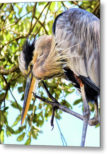 Great Blue Heron Close Up Metal Print