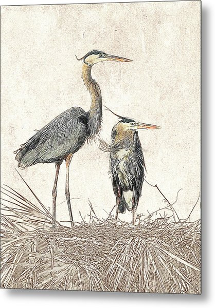 Metal Print featuring the photograph Great Blue Heron Couple - Photographic Drawing by Dawn Currie