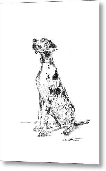 Great Dane 02 Metal Print