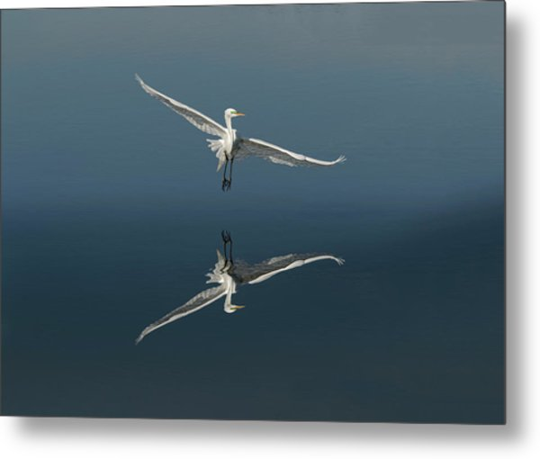 Great Egret Flying With Reflection Metal Print by Adam Jones