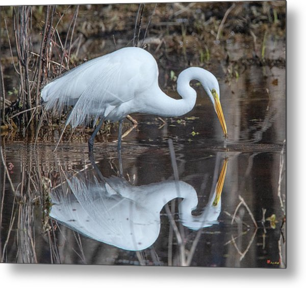 Great Egret In Breeding Plumage Dmsb0154 Metal Print