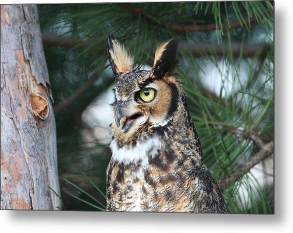 Great Horned Owl 5151801 Metal Print