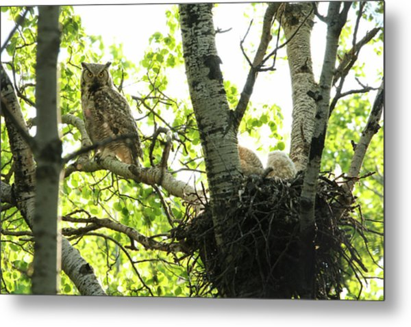 Great Horned Owl And Babies Metal Print
