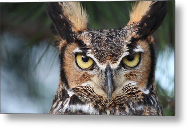 Great Horned Owl Eyes 51518 Metal Print