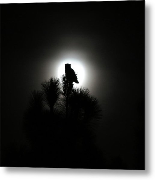 Great Horned Owl With Winter Moon Metal Print by Robin Street-Morris