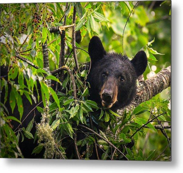 Great Smoky Mountains Bear - Black Bear Metal Print