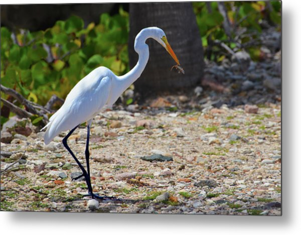 Great White Egret Hunter Metal Print