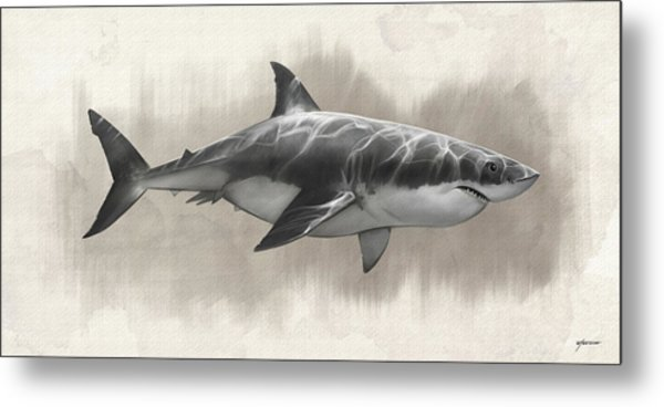 Great White Shark Drawing Metal Print by Steve Goad