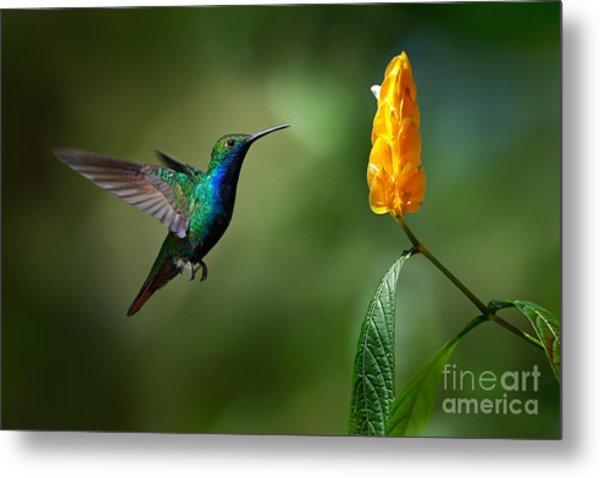 Green And Blue Hummingbird Metal Print