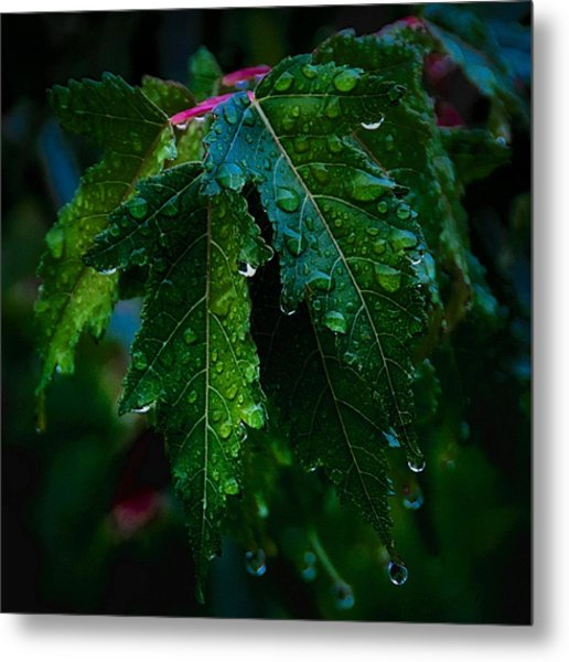 Green And Wet Leaves Metal Print