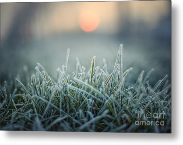 Green Grass With Morning Frost And Red Metal Print by Chromakey