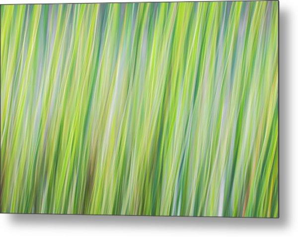 Green Grasses Metal Print