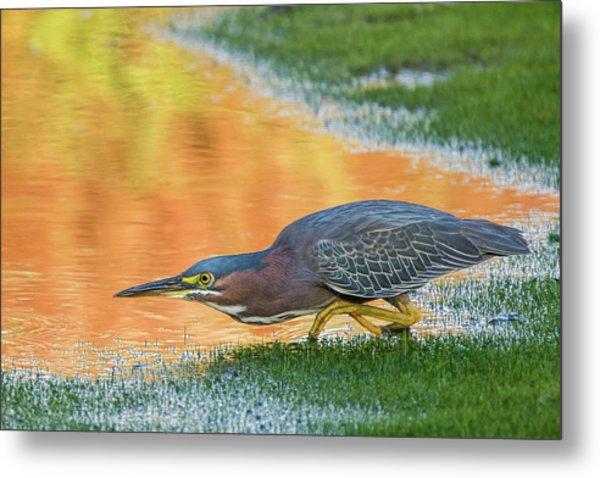 Green Heron 6227-061219-2 Metal Print
