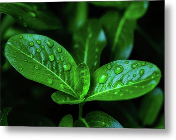 Green Leaf With Water Metal Print