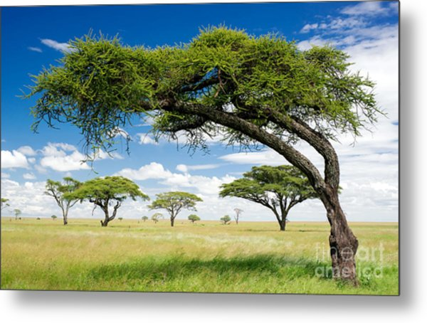 Green Trees In Africa, After The Rainy Metal Print