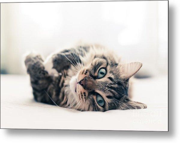 Grey Cat Lying On Bed Metal Print