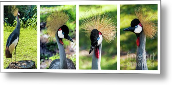 Grey Crowned Crane Gulf Shores Al Collage 1 Metal Print