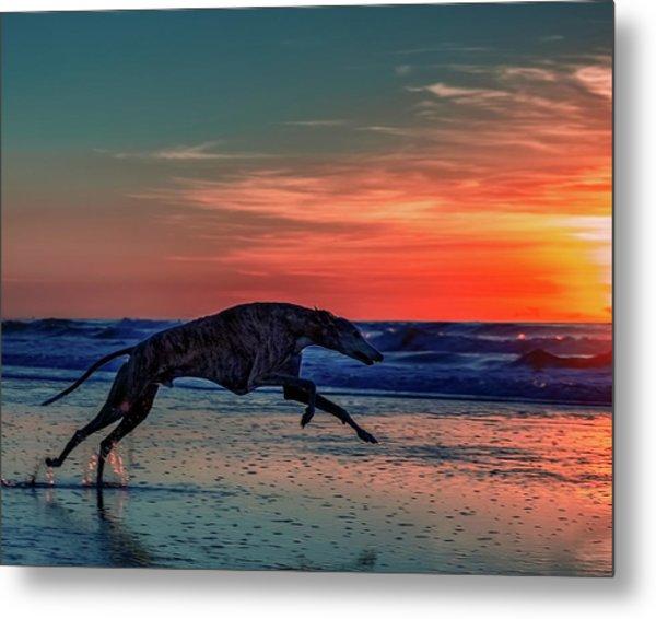Greyhound Running On Beach Metal Print
