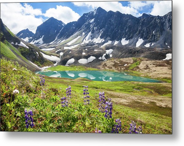 Metal Print featuring the photograph Grizzly Bear Lake by Tim Newton