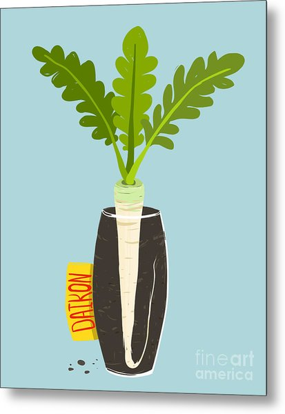 Growing Daikon Radish With Green Leafy Metal Print