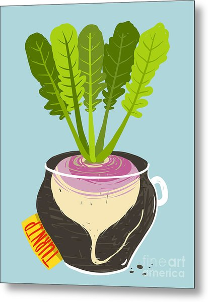 Growing Turnip With Green Leafy Top In Metal Print