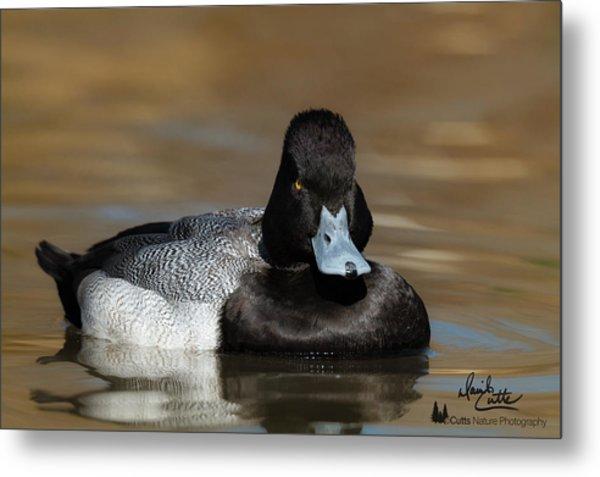 Grumpy Duck Metal Print
