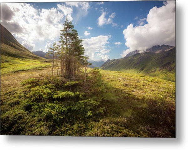 Metal Print featuring the photograph Haiku Forest by Tim Newton