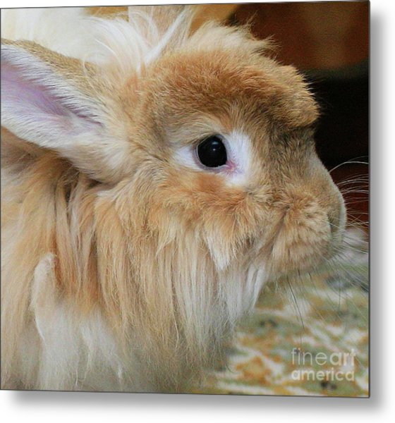 Hairy Rabbit Metal Print