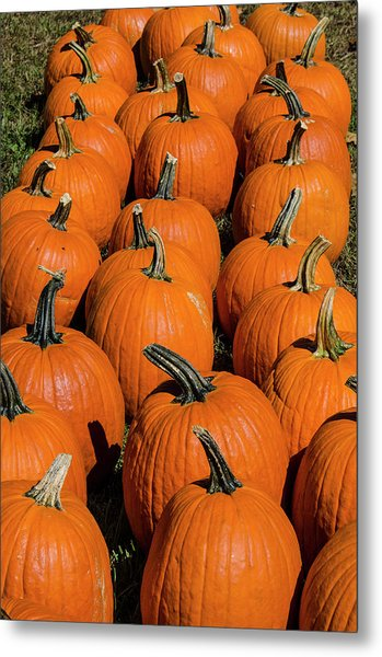 Halloween Harvest Metal Print