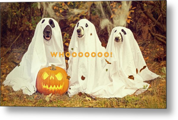Metal Print featuring the photograph Halloween Hounds by ISAW Company