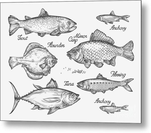 Hand Drawn Fish. Sketch Trout, Carp Metal Print