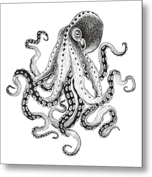 Hand-drawn Illustration Octopus, Vector Metal Print