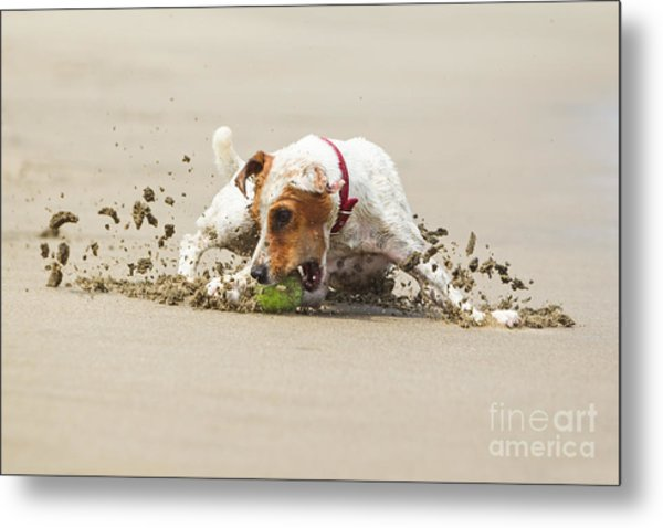 Happy Dog Stopping On The Ball High Metal Print by Ammit Jack