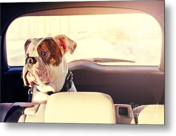 Happy Dog Traveling In The Car Boot Metal Print by Little Moon
