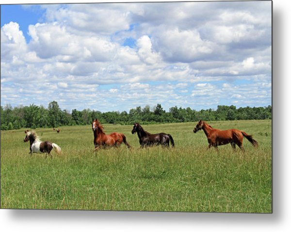 Happy Horses Metal Print by Corrie White Photography