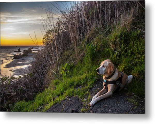 Metal Print featuring the photograph Harris Beach Sunset by Matthew Irvin