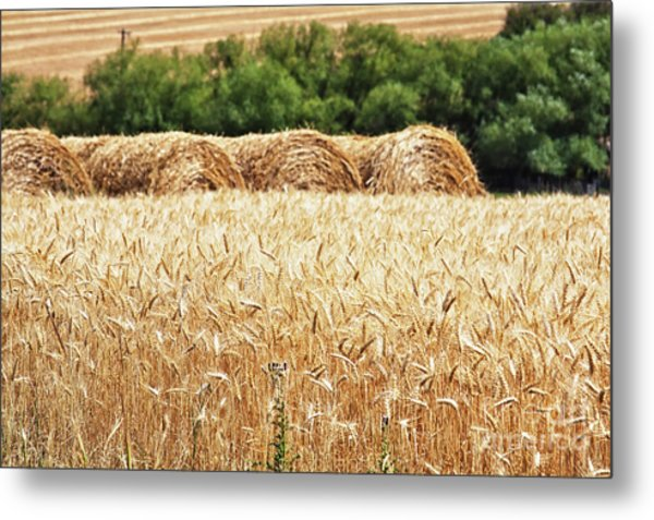 Metal Print featuring the photograph Harvest Time In Idaho by Tatiana Travelways