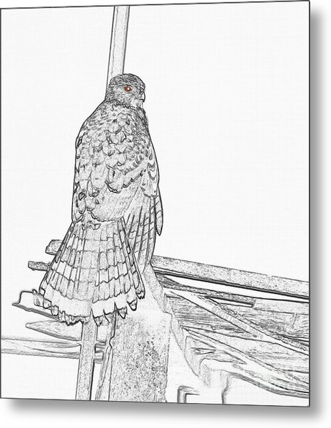 Metal Print featuring the photograph Hawk Photo Sketch by Debbie Stahre