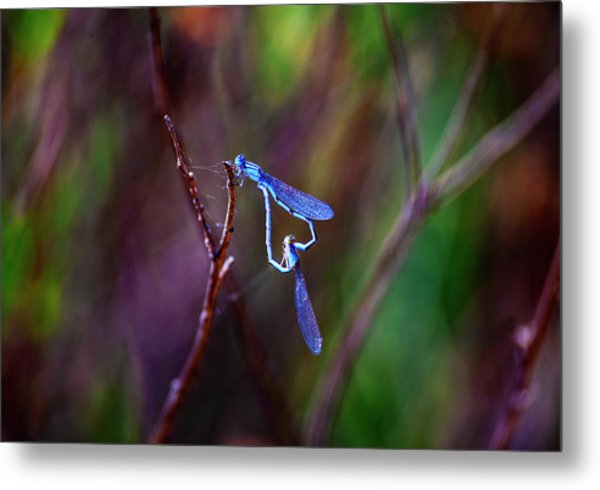 Heart Of Dragonfly Metal Print