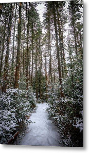 Hemlock Forest Freeport Maine Metal Print