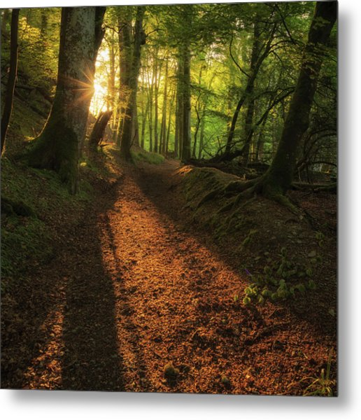 Metal Print featuring the photograph Henllan Woods Sunrise by Elliott Coleman
