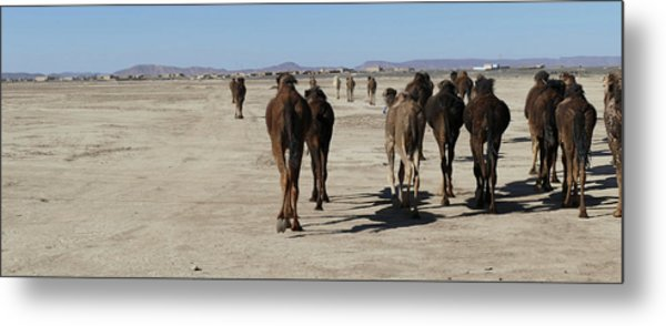 Herd Of Camels Crossing The Highway Near  Rissani Metal Print
