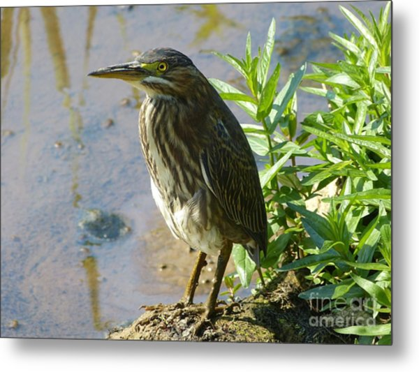 Heron At Redman Metal Print