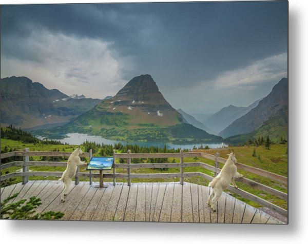 Hidden Lake Overlook // Glacier National Park Metal Print