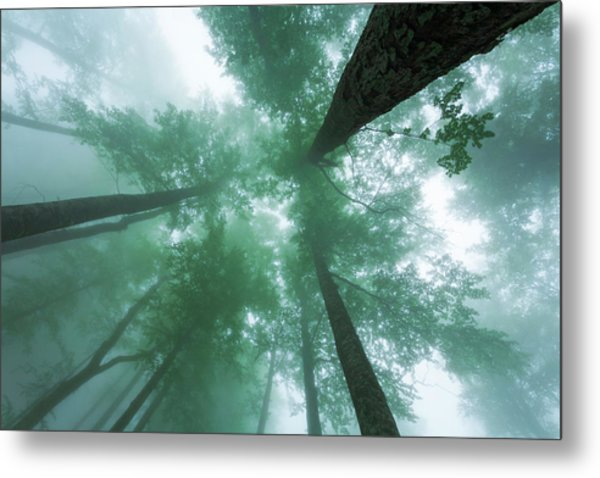 High In The Mist Metal Print