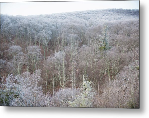 Hoarfrost In The Tree Tops Metal Print