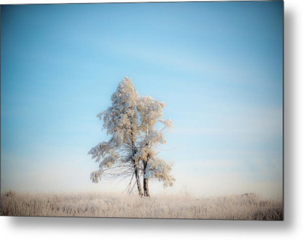 Metal Print featuring the photograph Hoarfrost On The Prairie by Mark Duehmig